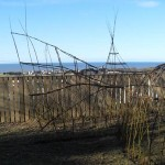 Living Willow Wales - Willow Fish at Ysgol Llannon