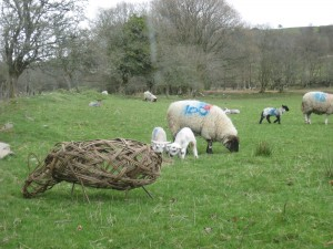 Willow Sheep